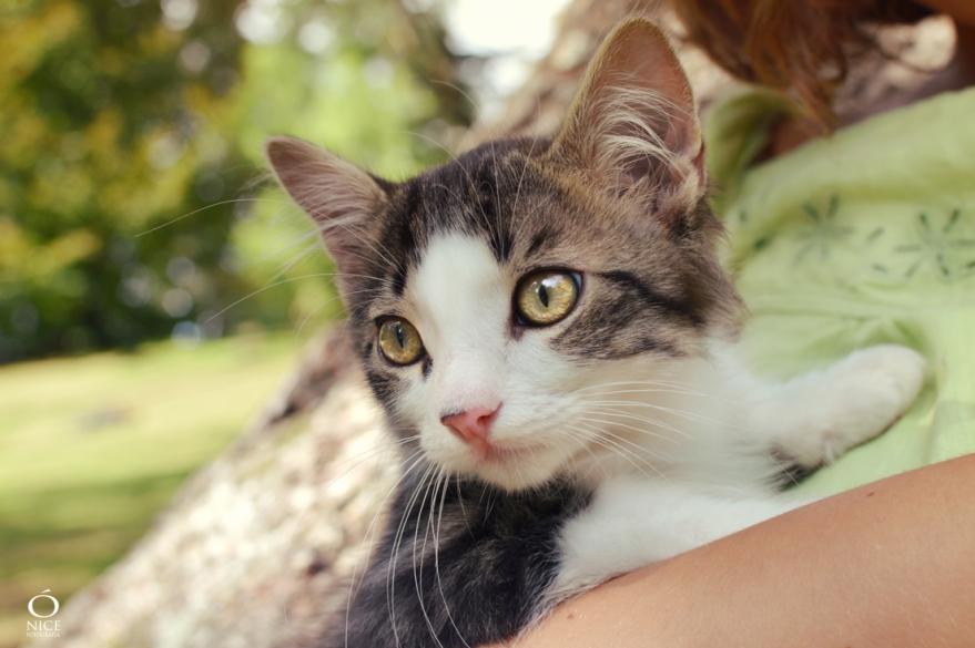 ónice-fotografía-fotógrafo-mascota-donosti-san-sebastián