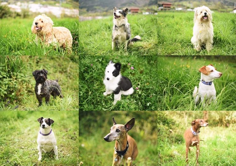 ónice fotografía fotógrafo rentería animales